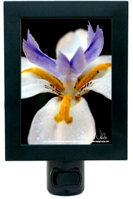U201cButterfly Irisu201d Flower Night Light