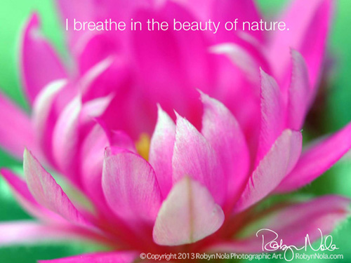 Image result for images of inspirational flowers